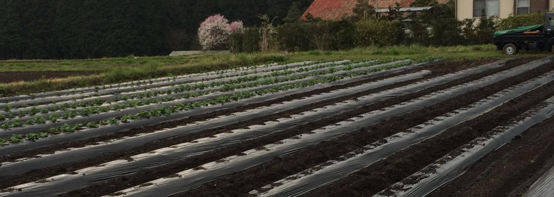 たなべさんちの「ふもとも農園」